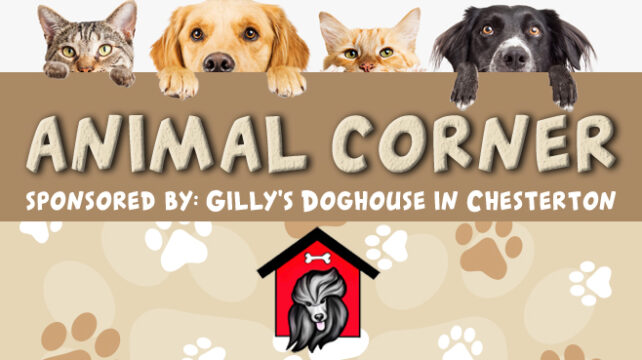 Animal Corner Sponsored by Gilly's Doghouse in Chesterton